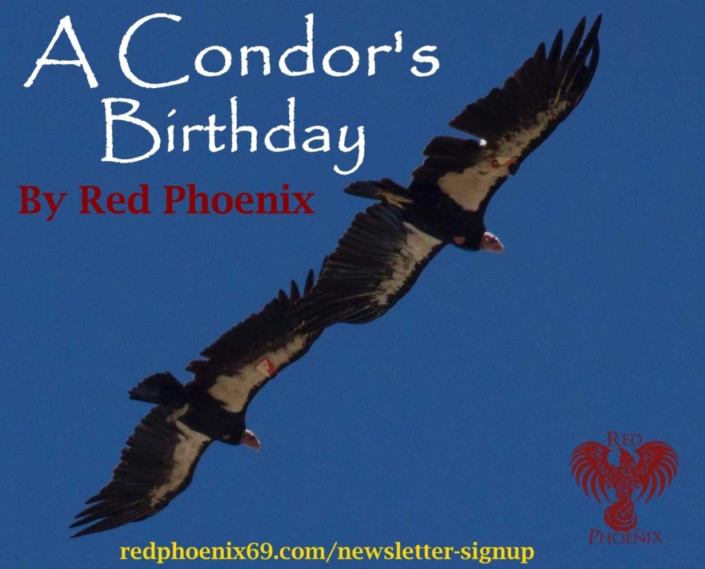 2 condors signup ad